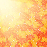 Autumn Leaves Pattern rojo y amarillo Foto de archivo libre de regalías