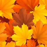 Autumn leaves pattern. Seamless pattern of color autumn leaves Stock Image