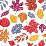Autumn leaves pattern Stock Photography