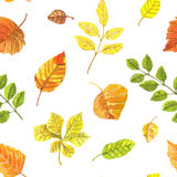 Autumn leaves pattern Royalty Free Stock Photo