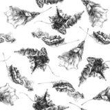 Autumn Leaves Pattern sec Photographie stock libre de droits
