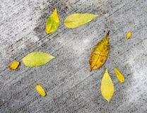 Autumn Leaves Pattern on Sidewalk Royalty Free Stock Photos
