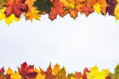 Autumn composition. Autumn leaves pattern on white, leaves framing, copy space, white centre, bright autumn colors stock images