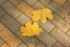 Autumn leaves on pavement Royalty Free Stock Images