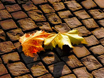 The autumn leaves on  pavement Stock Image