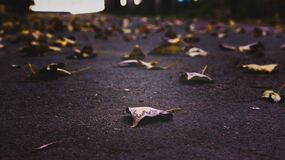 Autumn leaves on pavement Royalty Free Stock Image