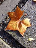 Autumn leaves on pavement background