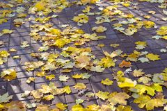 Autumn leaves on the pavement background royalty free stock images