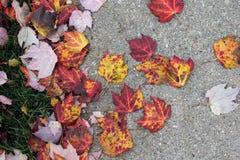 Autumn leaves on pavement Stock Photos