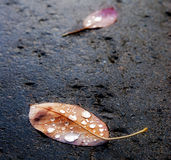 Autumn leaves on pavement after the rain Stock Photo