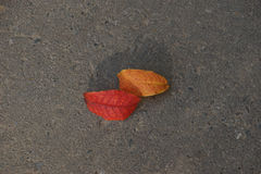 Autumn leaves on the pavement Stock Photo