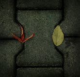 Autumn leaves on the pavement Royalty Free Stock Photos