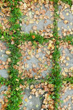 Autumn leaves on pavement slab Royalty Free Stock Photos