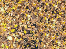 Autumn leaves on the pavement. Stock Photos