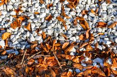 Autumn leaves on pebble beach stock images