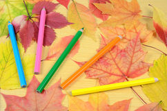 Autumn leaves and pencils Stock Photos