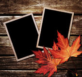 Autumn Leaves and photo frame Royalty Free Stock Images