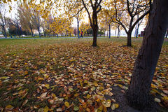 The autumn leaves Royalty Free Stock Images