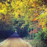 Autumn Leaves. Photograph of a rustic dirt road surrounded by autumn leaves royalty free stock image