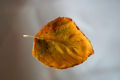 Beautiful Autumn Leaf On Blurred Background royalty free stock photography