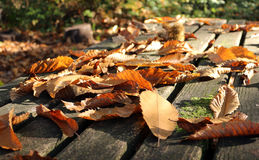 Autumn leaves on a picnic table. A close up of fallen autumn leaves across a picnic table Royalty Free Stock Photos