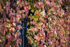 Autumn leaves. The picture was taken in Russia Royalty Free Stock Image