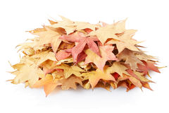 Autumn leaves pile. On white, clipping path included royalty free stock image