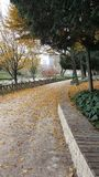 Autumn, leaves are in places. Blossomed leaves, walking path, fallen leaves Stock Images