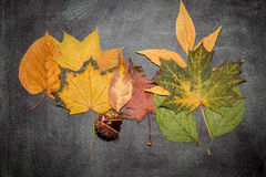 Autumn leaves. On a plate Royalty Free Stock Photography