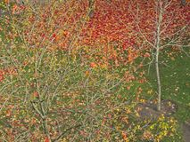 Autumn leaves at Plaza da Cítara, Pontevedra stock photo