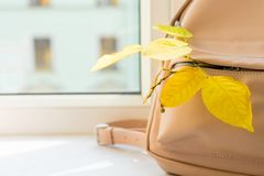 Autumn leaves in the pocket of a school backpack royalty free stock images