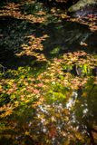 Autumn Leaves in pond royalty free stock photo