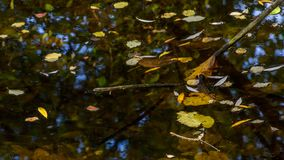 Autumn leaves in a pond. Fallen autumn leaves in small pond stock photo