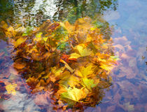 Autumn leaves in a pond Royalty Free Stock Images