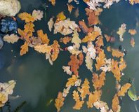 Autumn leaves and pond stock photo