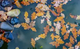 Autumn leaves and pond royalty free stock image