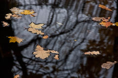 Autumn leaves in a pond Stock Photo
