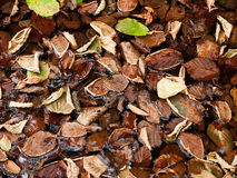 Autumn leaves in pool of water Stock Images