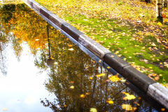 Autumn leaves in a puddle. Rich colors. Royalty Free Stock Photography