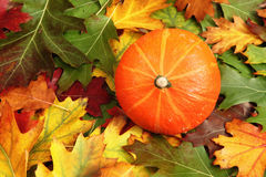 Autumn leaves with pumpkin Royalty Free Stock Photo