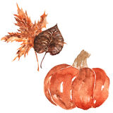 Autumn leaves and pumpkin Stock Images