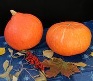 Autumn leaves and pumpkins on black background. With copy space Stock Photography
