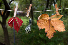 Autumn leaves and pumpkins Stock Photography