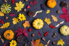 Autumn leaves and pumpkins over dark concrete background Mockup for seasonal offers and holiday post card stock photos
