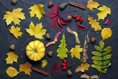 Autumn leaves and pumpkins over dark concrete background Mockup for seasonal offers and holiday post card,. Top view royalty free stock images