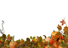 Autumn leaves and pumpkins  on white background Royalty Free Stock Image