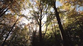 Autumn Leaves que balancea en un árbol en parque otoñal Caída Parque colorido del otoño Llamarada de Sun almacen de metraje de vídeo