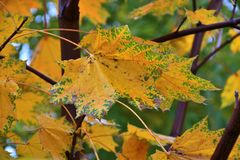 Autumn leaves after the rain. In the City Park royalty free stock photography