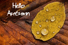 Autumn Leaves With Rain Droplets Hello Autumn Concept Wallpaper Stock Afbeelding