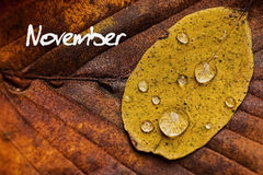Autumn Leaves With Rain Droplets. November Concept Wallpaper. Stock Image